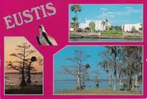 Florida Eustis Multi View