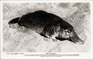 The Platypus Australia Unused Rose Stereograph Co RPPC Postcard G29