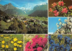 Switzerland Engelberg Gesamtansicht Berg Mountains Flowers Edelweiss