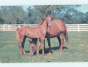 Pre-1980 STONER CREEK STUD FARM Paris Kentucky KY AD2355
