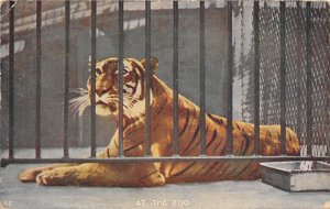At the Zoo, Tiger New York Zoological Park, USA 1910