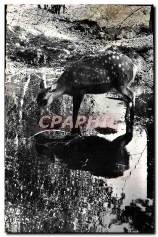 Postcard Modern Alpine Zoo Les Marecottes deer