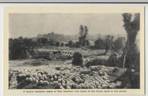 New Zealand; Typical Pastoral Scene, Finest Lamb In The World PPC Unused, c 1920