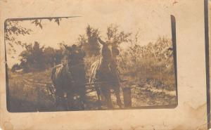 Real Photo Postcard~Pair of Horses Yoked on Dirt Road~Farm Field~c1914 RPPC