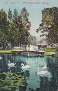 Swans,  East Lake Park,  Los Angeles,  California,   PU_1909