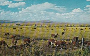 Nevada Ranch Scene Largest Beef Cattle Producer In The United States