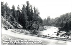 RPPC Driving on California's Redwood Highway Real Photo Postcard c. 1939-1950
