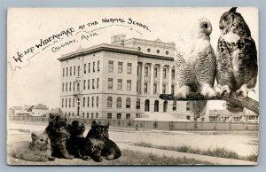 CATS & OWLS CALGARY ALTA CANADA SCHOOL ANTIQUE REAL PHOTO POSTCARD RPPC montage