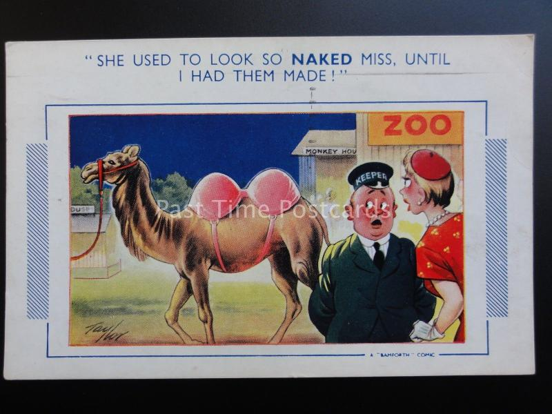 Taylor CAMEL SHE USED TO LOOK SO NAKED MISS UNTIL I HAD THEM MADE Bamforth Comic