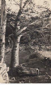 RP: BERLIN , New York , 1924 ; Woods