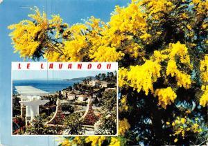 France La Cote d'Azur Le Lavandou Var Panorama Fleurs