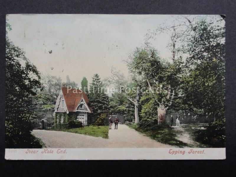 Essex: Epping Forest Near Kale End c1904 (PM) STROUD DUPLEX (757)