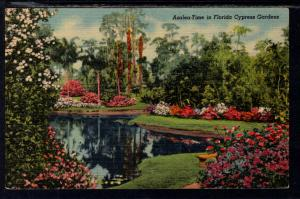 Azeala Flower Time in Florida Cypress Gardens