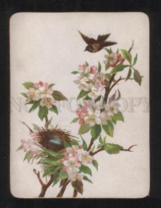 068210 BIRD on Apple Tree Style KLEIN old Card