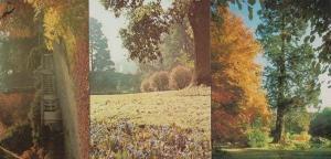 3x Autumn Sheffield Park Gardens Garden Sussex + Chinese Japan Maple Postcard s