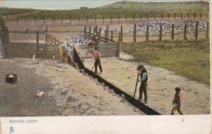 Tucks Dipping Sheep Ranching in The West Series