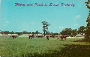 Mares and Foals in Scenic Kentucky at Horse Farms near Lexin