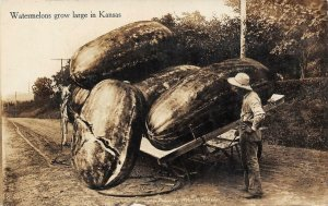 RPPC Watermelons Grow Large In Kansas Giant Fruit Exaggeration Postcard 1911