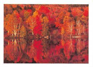 Tree Postcard , Autumn in the Adirondacks, New York, USA, United States U11