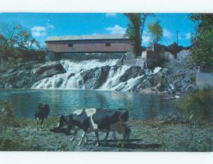 Pre-1980 COVERED BRIDGE BEHIND COWS North Hartland Vermont VT d4415