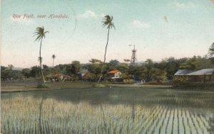 HONOLULU , Hawaii , 1913 ; Rice Field