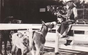 RP; DETROIT, Michigan, 1930's; Pigmy Burros, Detroit Zoological Park
