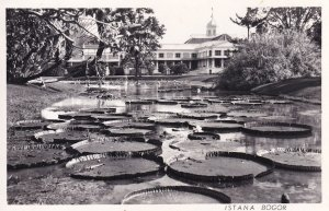Bogor Indonesia Istana Gardens Real Photo Old Postcard