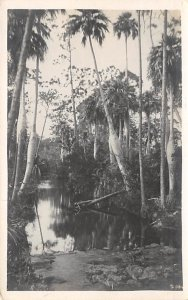 Swamp real Photo Jamaica 1971