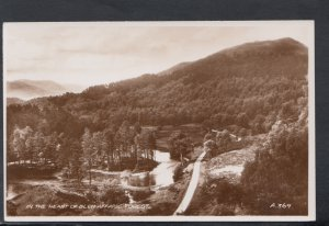 Scotland Postcard - In The Heart of Glen Affaric Forest  DC2618