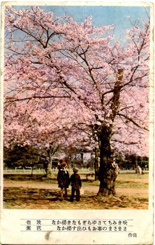 Japan - Cherry Blossoms
