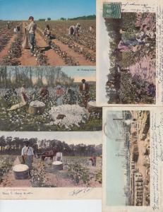 COTTON INDUSTRY USA CAMEROUN 18 Cartes Postales 1900-1940