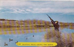 Duck Hunting From Among The Reeds