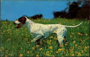 Hunting Dog POINTER (1970s)