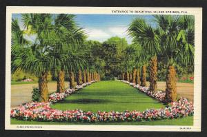 Entrance with Palm Trees Silver Springs Florida Unused c1935