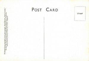 Vintage Postcard, Rice Harvest, Sierra Leone, Africa 77W