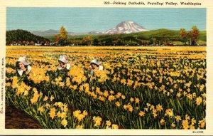 Washington Puyallup Vlley Women Picking Daffodils Curteich