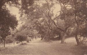Near LOS ANGELES, California, 1900-1910's; Drive In Baldwins Ranch