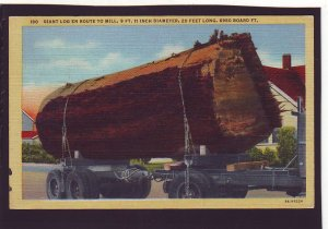 P1624 1947 pm postcard giant log to mill, logging truck