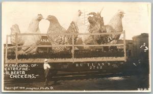 Alberta Canada Exajerado Pollos 1910 Antigüedad Real Foto Tarjeta Postal RPPC