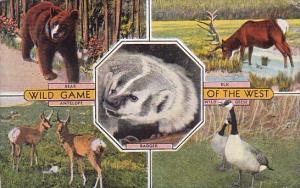 Wild Game Of The West Denver Colorado 1947