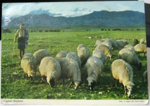 Cyprus Cypriot Shepherd - unposted foxed