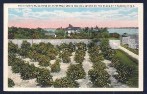 Orange Grove Homestead Florida unused c1920's