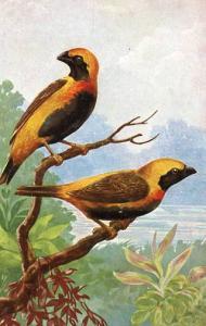 Two Beautiful Birds