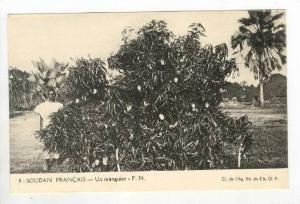 Soudan Francais - Un Manguier - F.N., 1910s