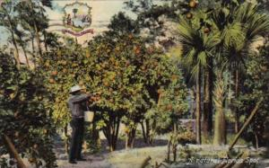 Typical Orange Grove A Natural Florida Spot 1911