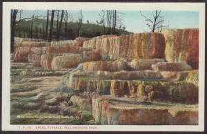 Angel Terrace,Yellowstone Postcard