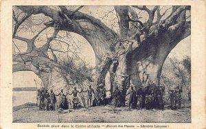 Central African Republic Baobab tree postcard