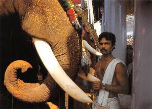 Mahout & Elephant - Kerala, India