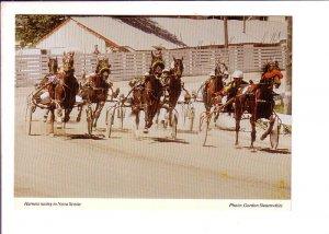 Horses Harness Racing, Nova Scotia