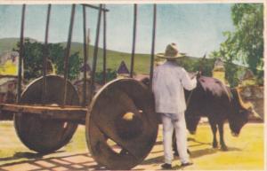 Carreta de Bueyes [oxcart] , Mexico , 1930s